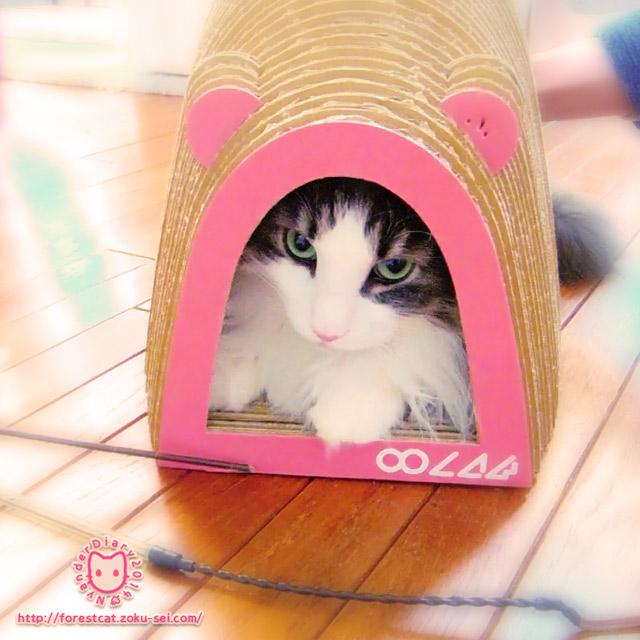 可愛い猫の爪とぎ マウステール ピンク